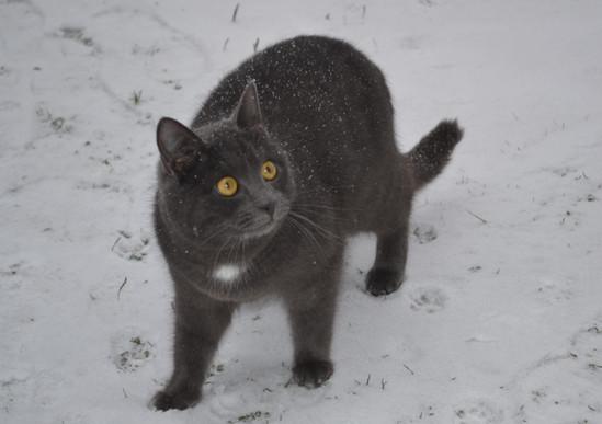 почему мы боимся черных кошек