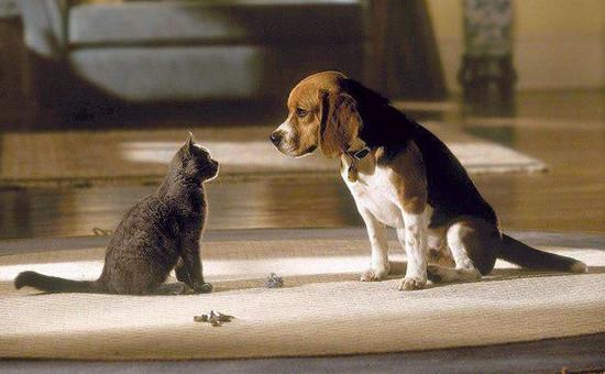 правила содержания собак и кошек, содержание собак и кошек