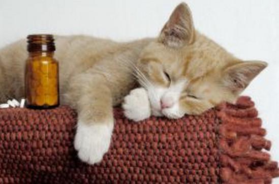 какие обезболивающие можно давать кошкам