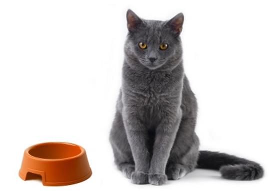 дешевый корм для кошек