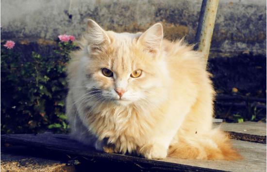 породы диких кошек с фото