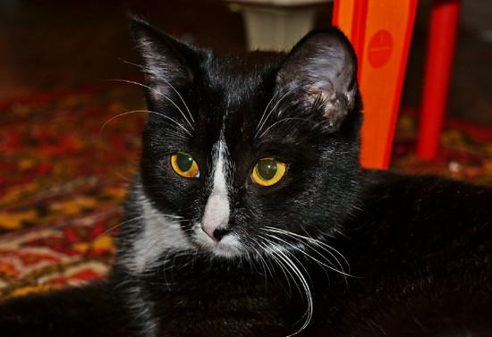 как назвать черную кошку