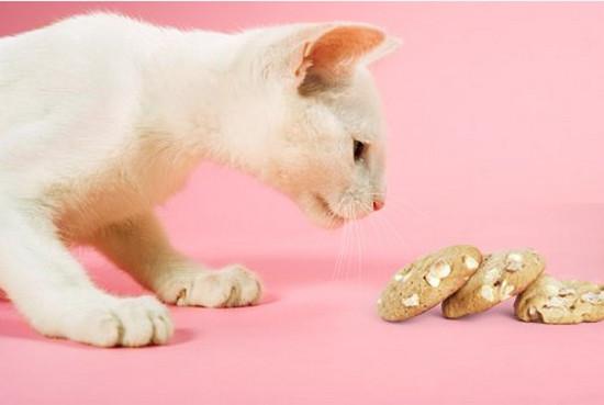 почему кошка плохо естпочему кошка плохо ест
