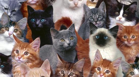 названия пород кошек