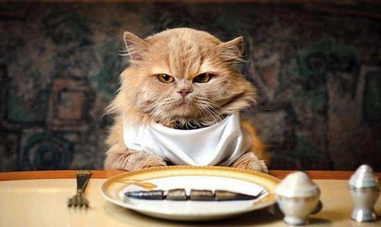 почему кошка ничего не ест