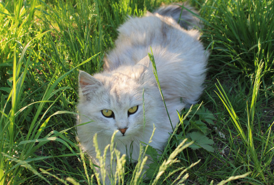 как отходят кошки после стерилизации
