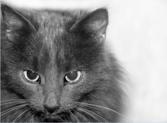 участие в выставке кошек