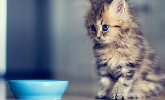 виды кормов для кошек
