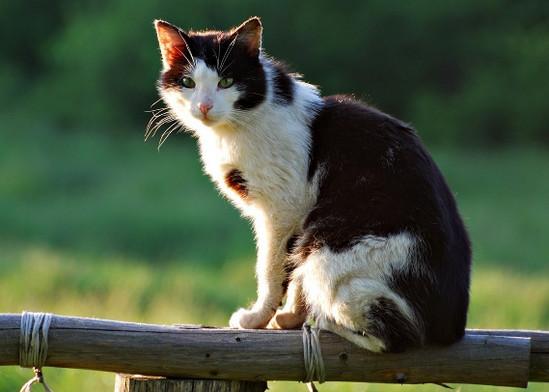 болезни почек у кошек