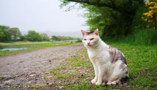 болезни зубов у кошек