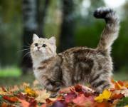 почему кошка мяукает