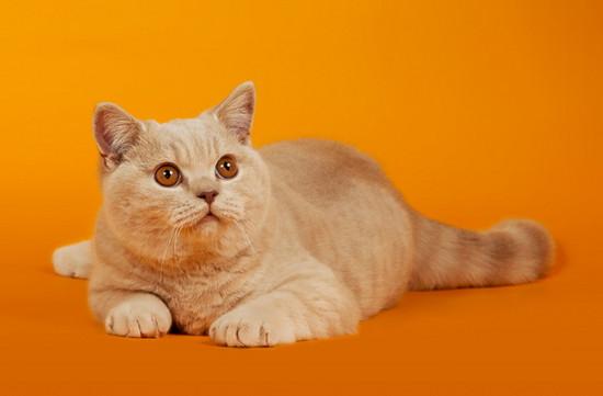 лечение кошек народными средствами