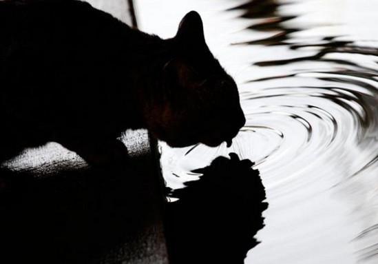 почему кошка не пьет воду