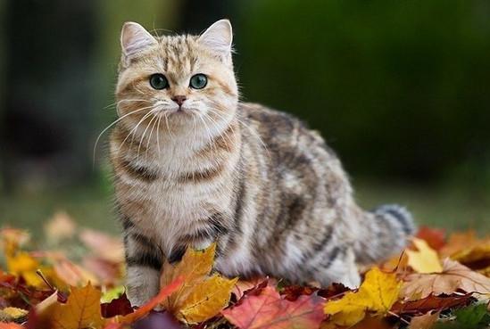 какие бывают окрасы у кошек