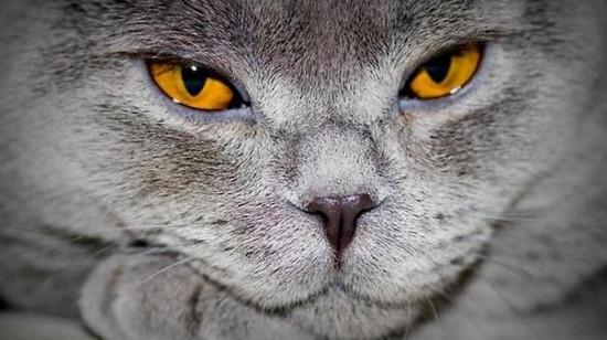 почему у кошки текут глаза