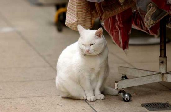 почему у кошки понос