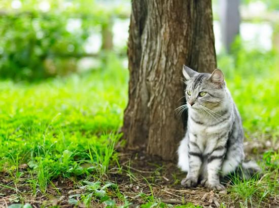 мастит у кошки, признаки мастита у кошек