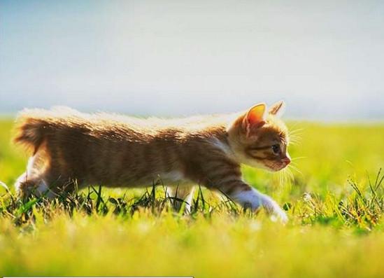 сколько стоит стерилизация кошки