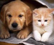 кошка и собака в квартире
