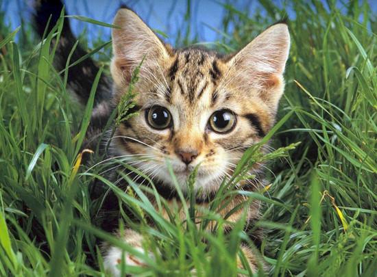 лечение акне у кошек