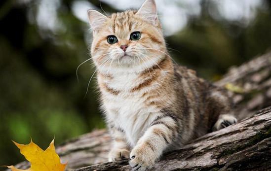лечение опухоли у кошек