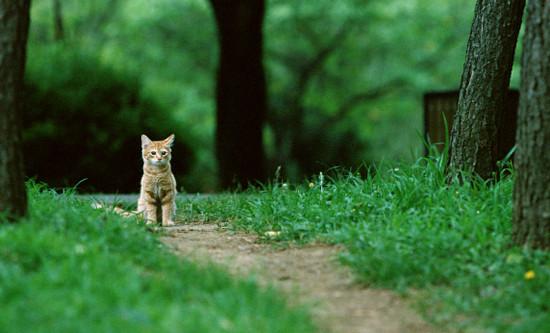 лечение отравлений у кошек