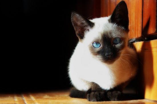лечение ран у кошек