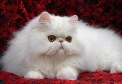 породы кошек с описанием характера