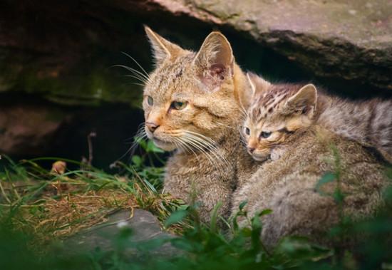 лечение почечной недостаточности у кошек
