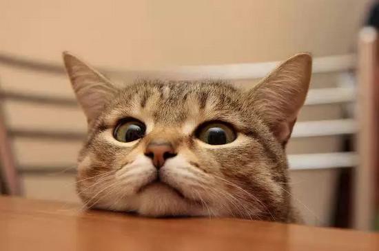 лечение герпеса у кошек