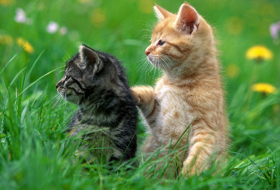 инстинкты кошек