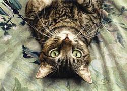 картины с изображением кошек