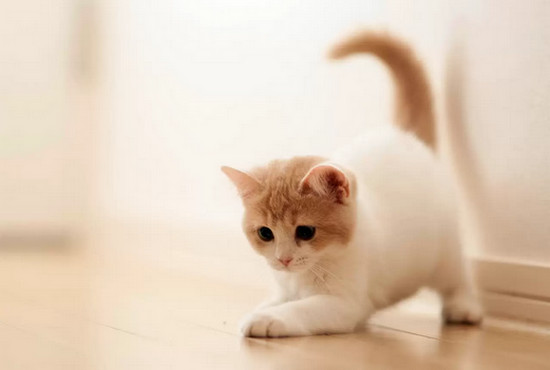 лечение колита у кошек