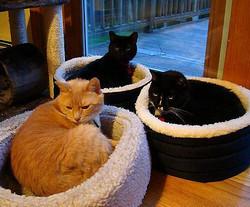 Лежак для кошки своими руками фото 630