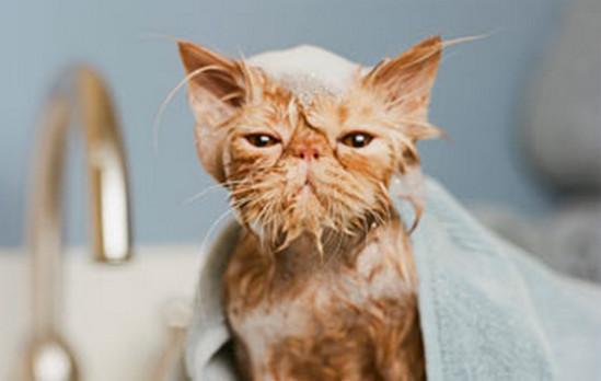 как часто надо мыть кошку