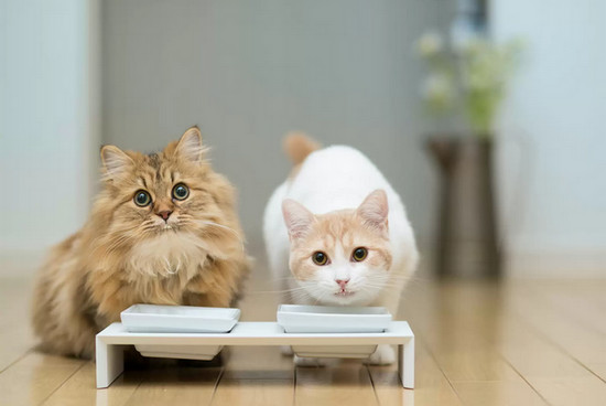 как приучить кошку к корму