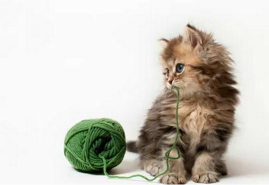 лечение гепатита у кошек