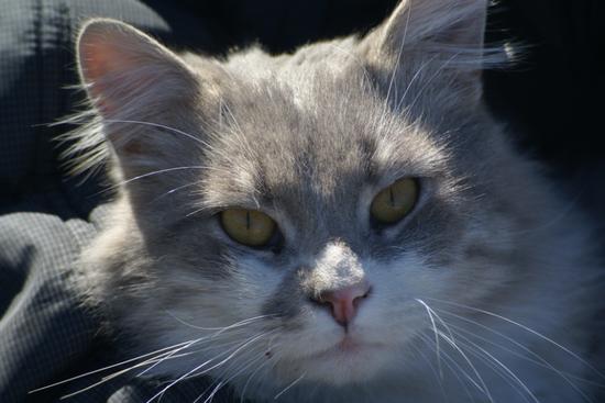 Для чего кошкам усы