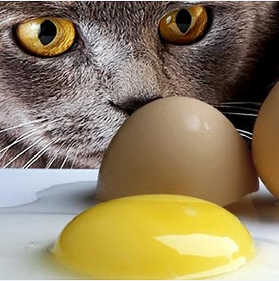 можно ли кормить котят яйцами