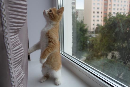 на какие звуки реагируют кошки