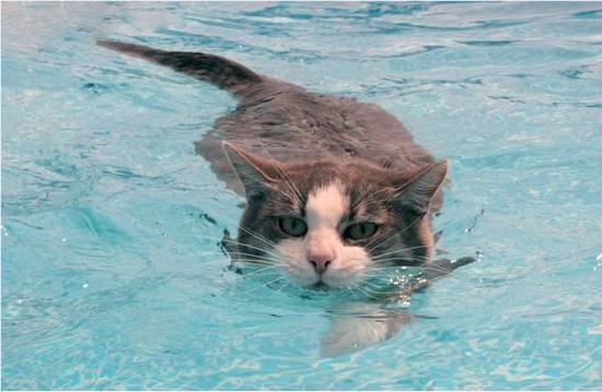 приучить котенка к воде