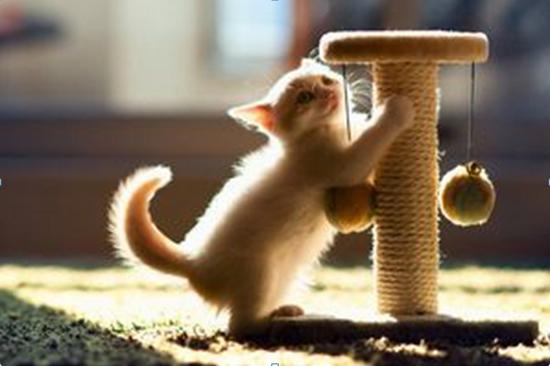 как правильно приучить котенка к когтеточке