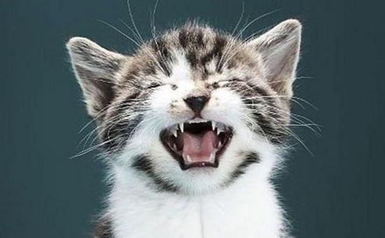 звуки, раздражающие кошек