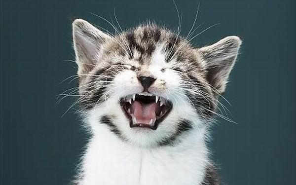 Кошачье мяуканье видео