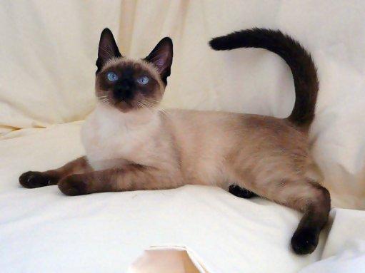 cat exam preparation sites