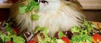 Как ввести в рацион кошки новый корм