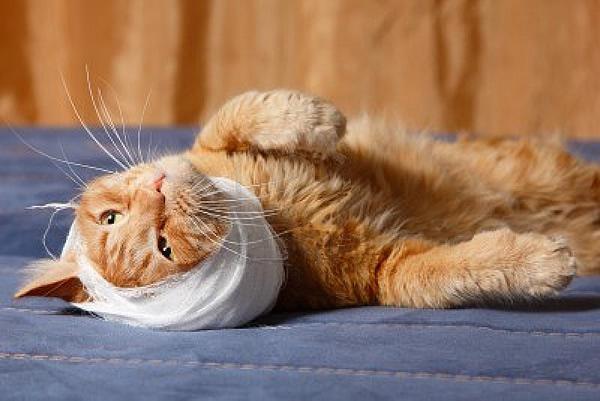 Тугая повязка у кота