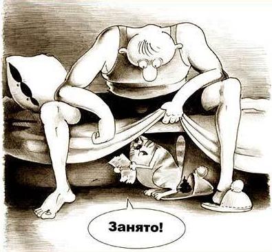 koshka-gadit