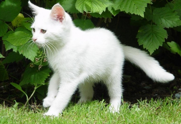 Кошка в возрасте до двух лет