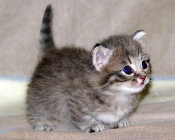 Понос у котенка: причины и лечение